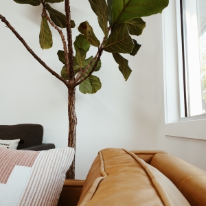 Living room with sofa and figg tree with white walls interior design